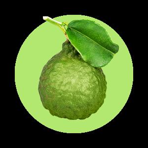 Bergamot v kombinácii s limetkou príjemne osviežuje dych.