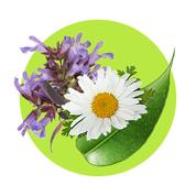 Bylinné extrakty majú protizápalový a upokojujúci účinok.
