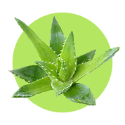 Aloe vera gél má protizápalové účinky.