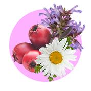 Aktívne bylinné výťažky majú silný protizápalový účinok a účinne pôsobia proti krvácaniu ďasien.