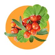 Olej z rastliny Geranium a extrakt z rakytníka má regeneračné a antibakteriálne účinky na sliznicu úst.