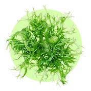 Spirulina je morská riasa, ktorý zvyšuje metabolizmus v tkanivách.