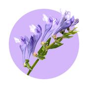 Prírodné rastlinné výťažky z rastlín šišak bajkalský, bergenia a spirulina majú silný protizápalový účinok.